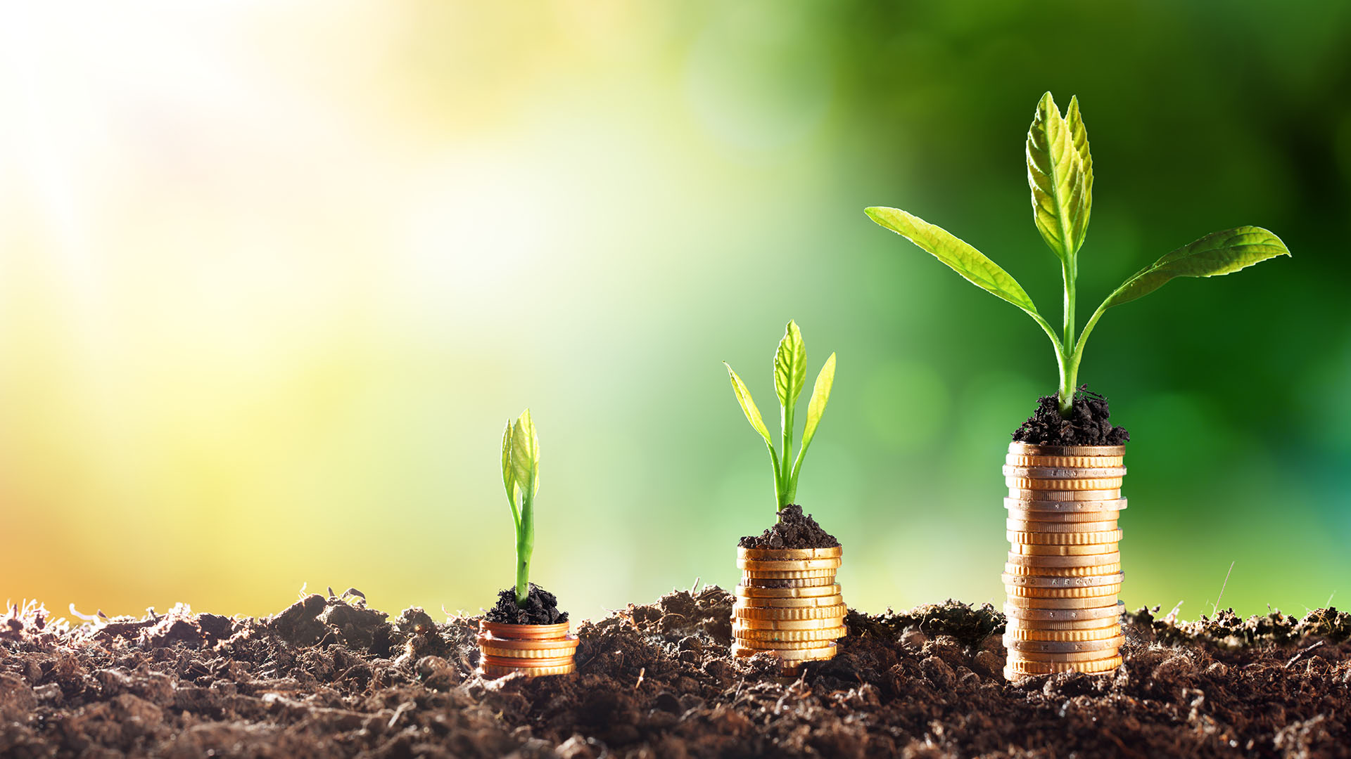 Socially responsible investment options